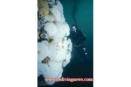 Mendocino County: Albion - California Diving News