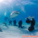 Shark Angels Expedition a Resounding Success