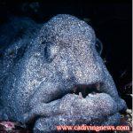 Wolf-Eels: When is an eel, not an eel?