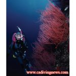 Top Ten Tips For More Enjoyable California Diving