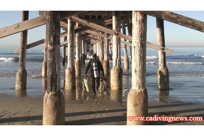 For Many Years I Ve Heard About Diving Under The Newport Pier Was Never Keen On Idea It S Surrounded My Surfers And Sand Protected By A Curtain