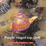 Jewels of the Sea: California?s Most Photogenic Sea Shells