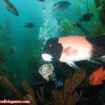 Effective Underwater Modeling