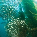 The Spice of the California Diving Experience
