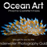 Ocean Art Underwater Photo Competition Deadline November 14