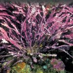 The Mysteries of Marine Algae, Part One