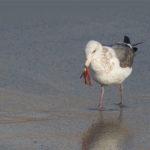 On Ocean Stewardship