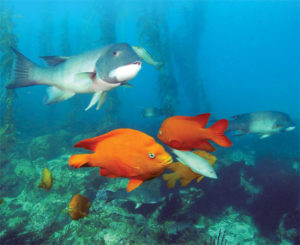 Deadman's Reef