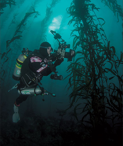 Well Protected Off Point Lobos The Wonders Of Gibson Beach California Diving News