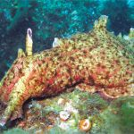 "The Fascinating ""Bunny Slug"": The California Brown Sea Hare"