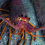 Something for Everyone: Satisfying Diving at Hen Rock, Catalina Island