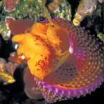 Gorgeous Gastropods: Admiring SoCal's Colorful Seashells Shell Stats