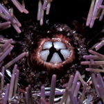 Attack of the Purple Sea Urchins: What Happens When Nature is Out of Balance