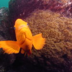Two-for-One Fun at Anacapa: Goldfish Bowl