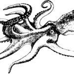February 8:Cephalopod Celebration at Birch Aquarium